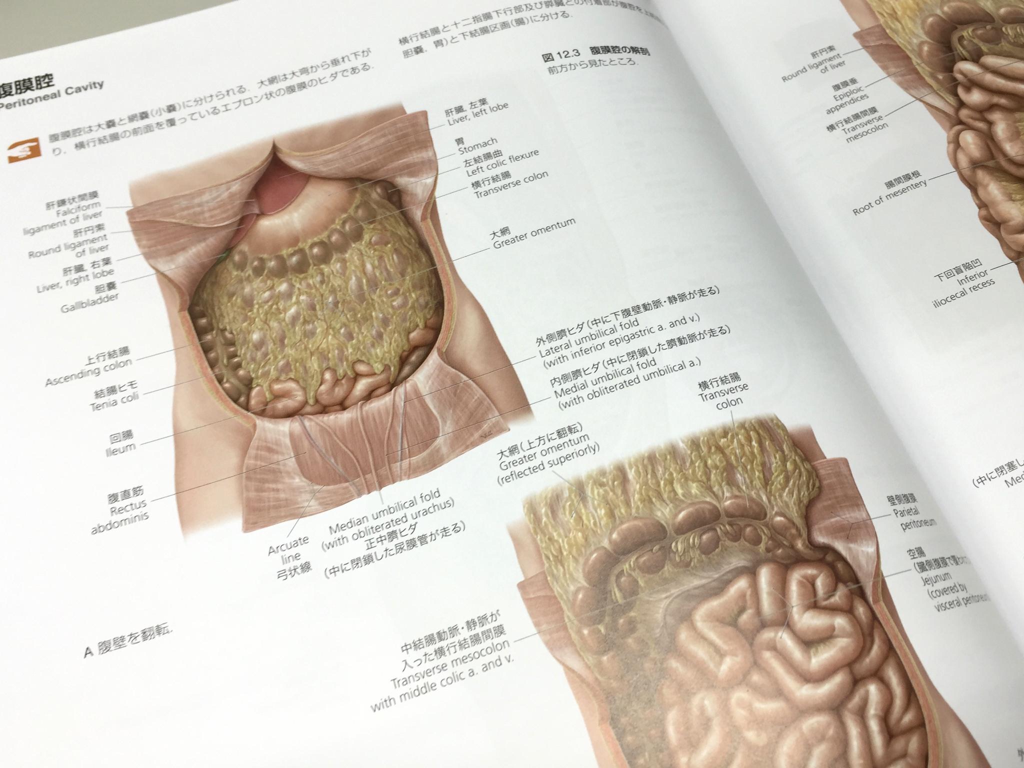 内臓関係の図は主にVoll氏が制作。ソフトなタッチで臓器や脈管がふっくらと描かれている