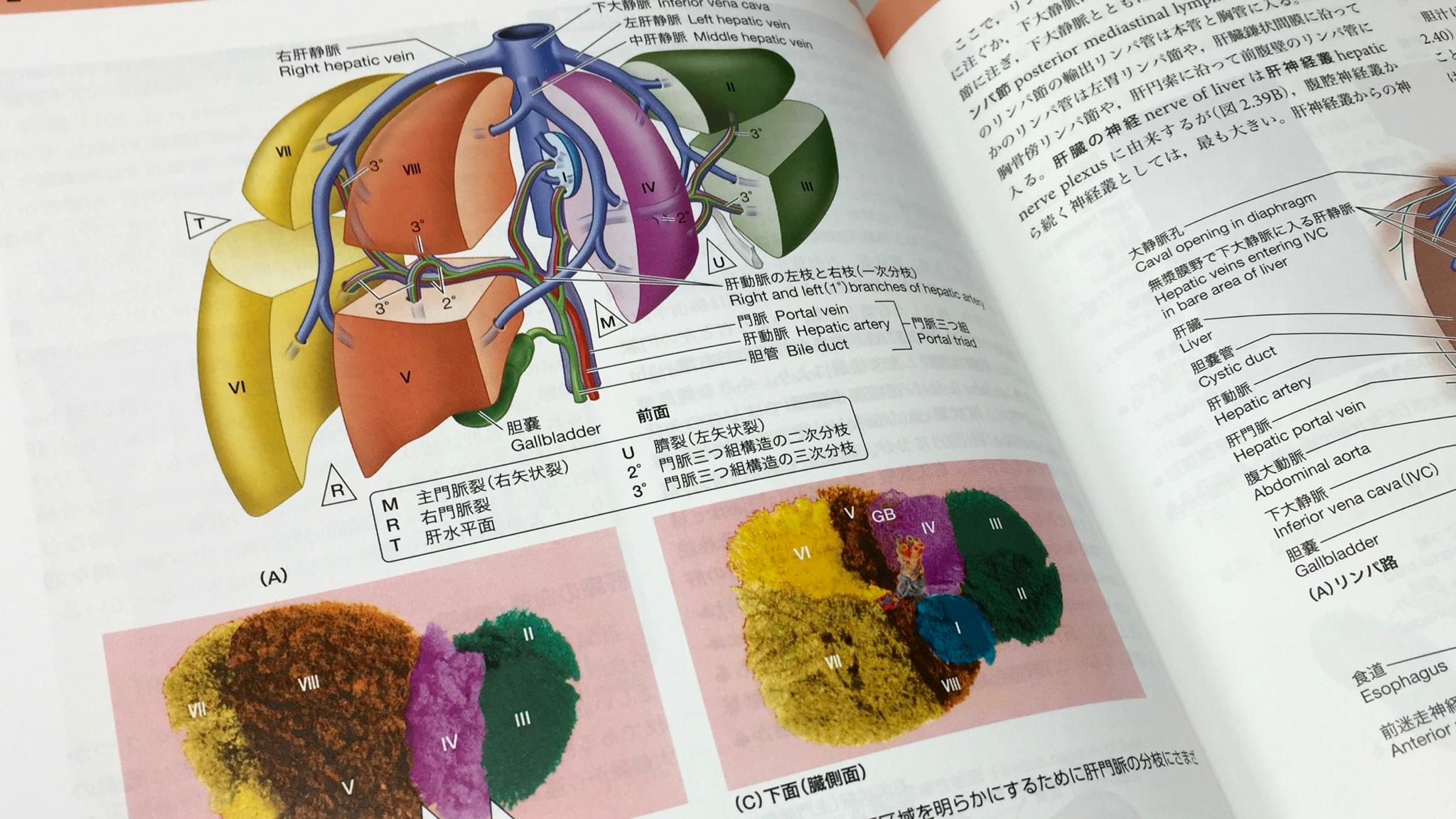 肝臓の区域解剖。臨床で重要になる。
