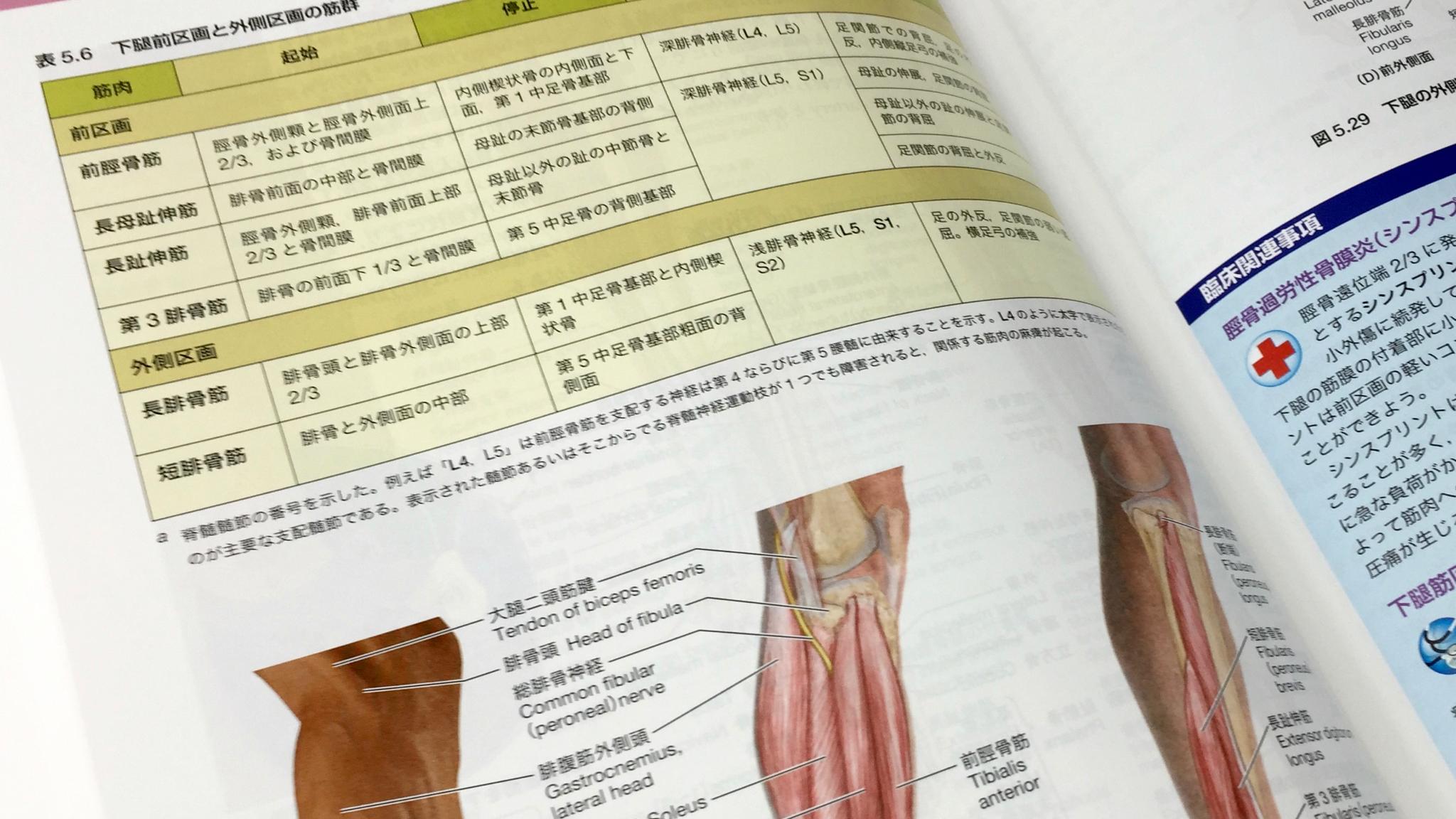 筋の起始停止神経は表に。